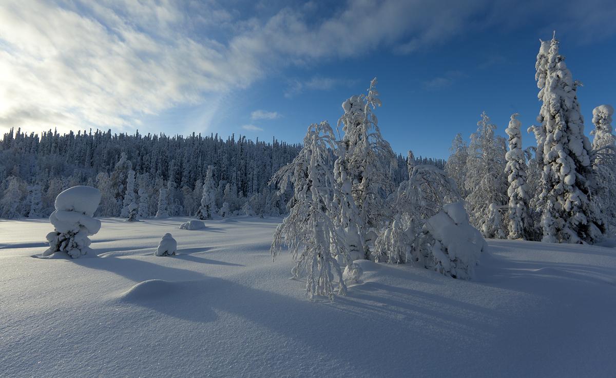 Lume lummuses