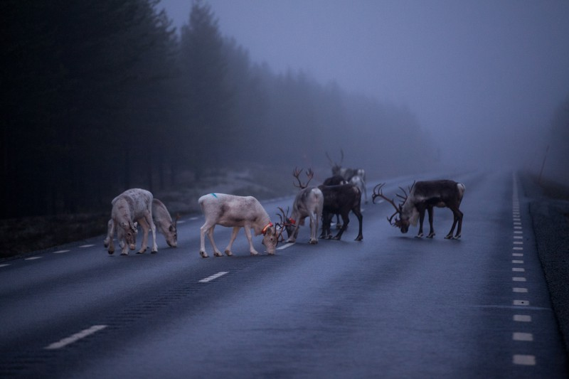 Hommik maanteel