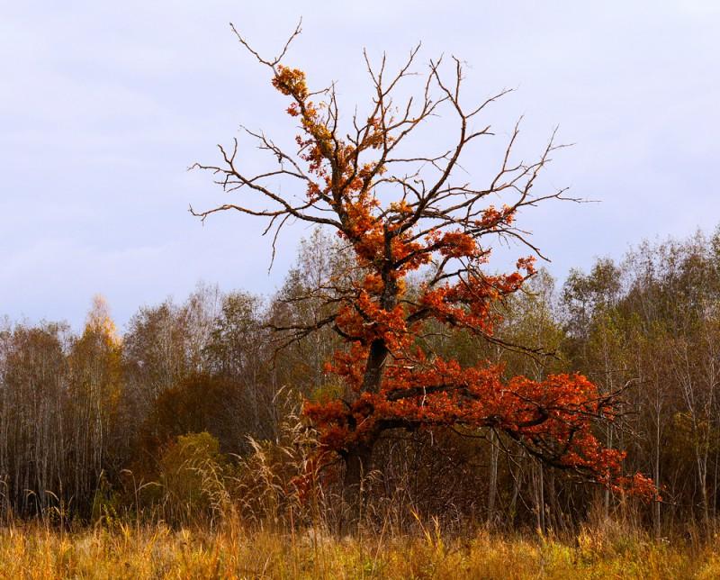 Huvitav puu