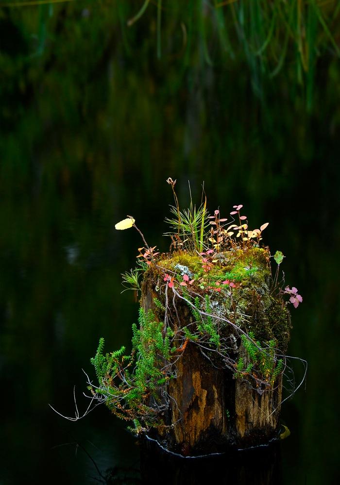 Looduslik ikebana