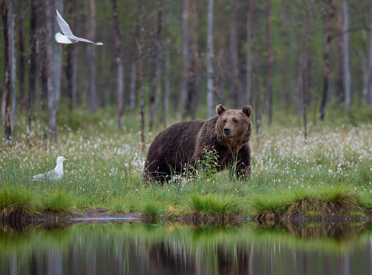 Kajakad ja karu