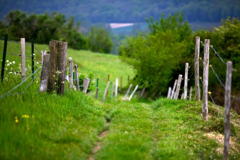 Karjaaia äärne tee