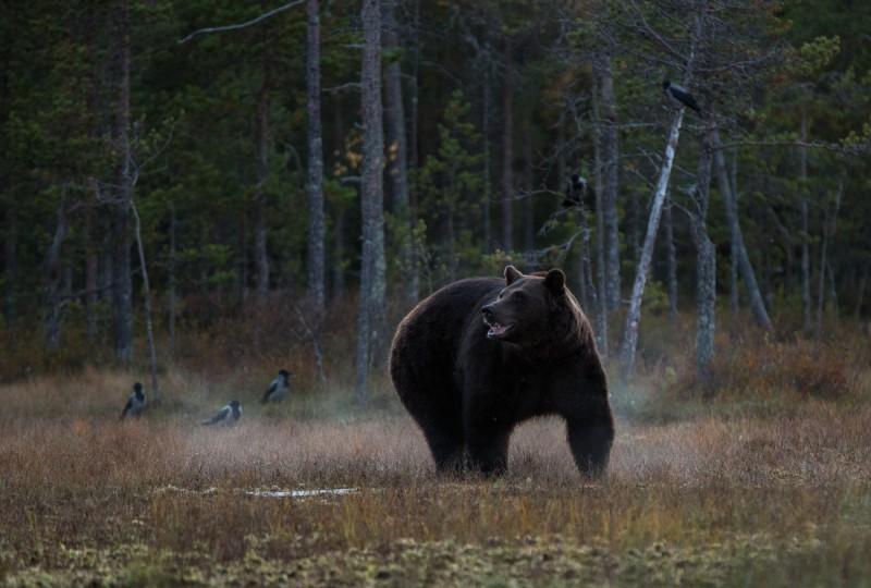 Karu, varesed ja hetk peale loojangut