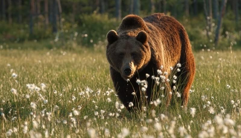 Karu aasal