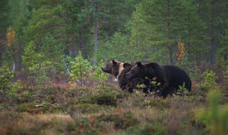 Karud