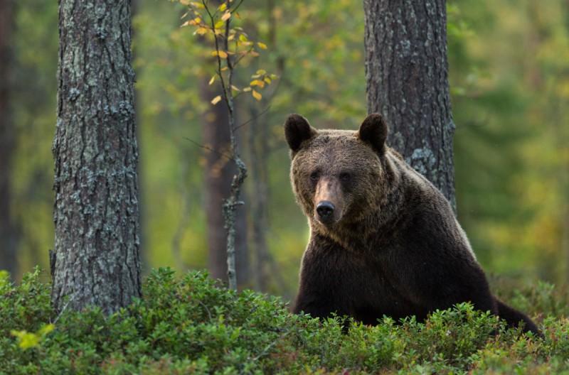 Karu metsas männi all