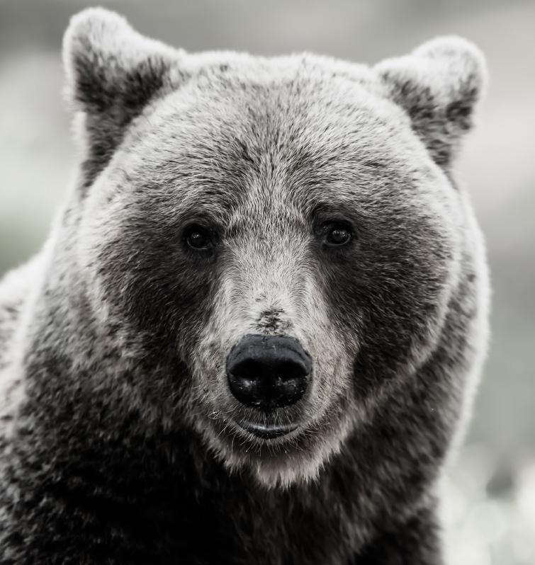 Karu mustvalgena