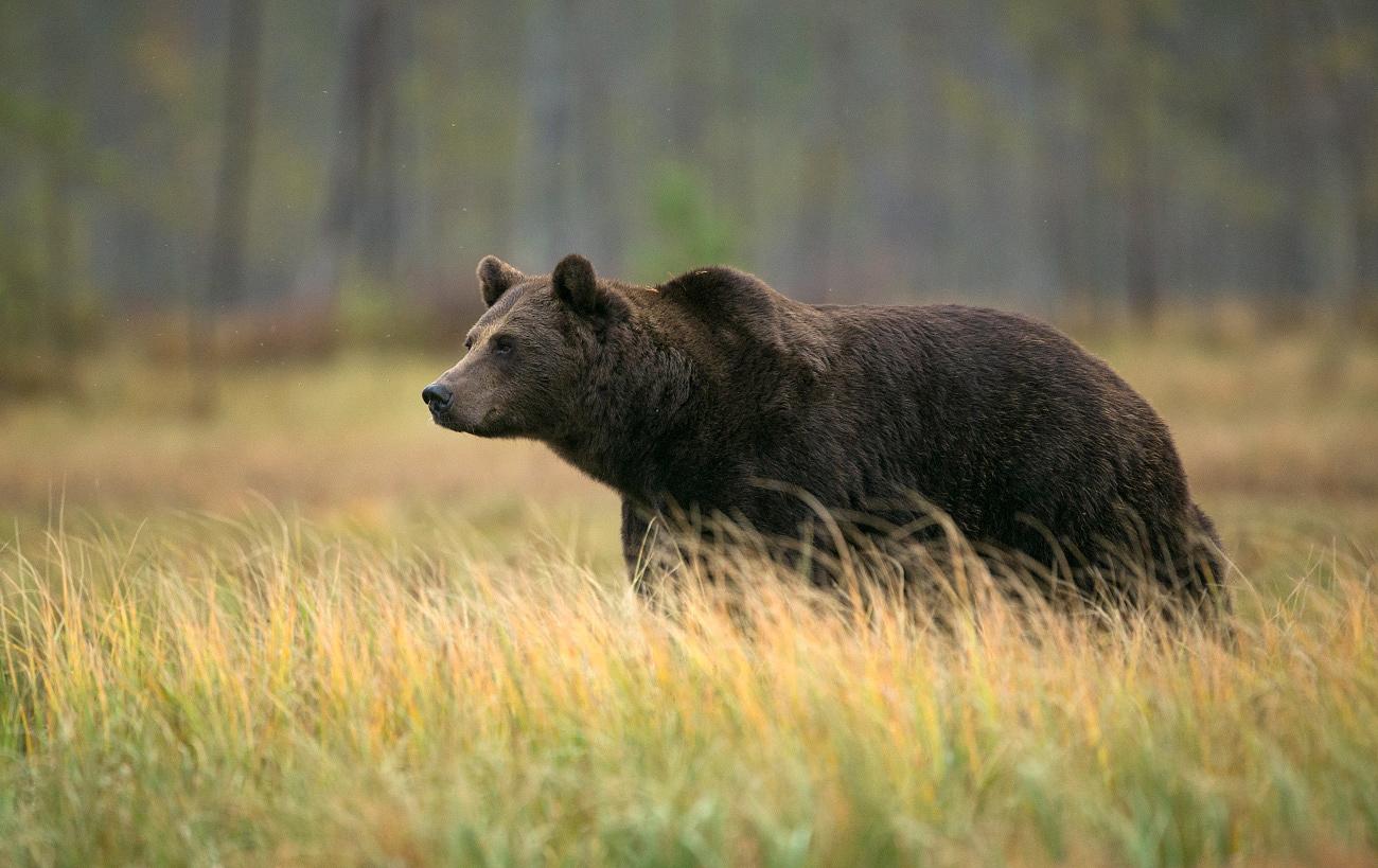 Karu rabamaastikul