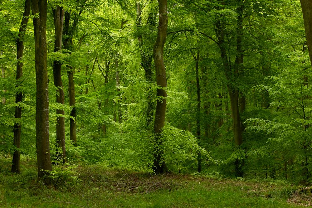 Kevadine mets