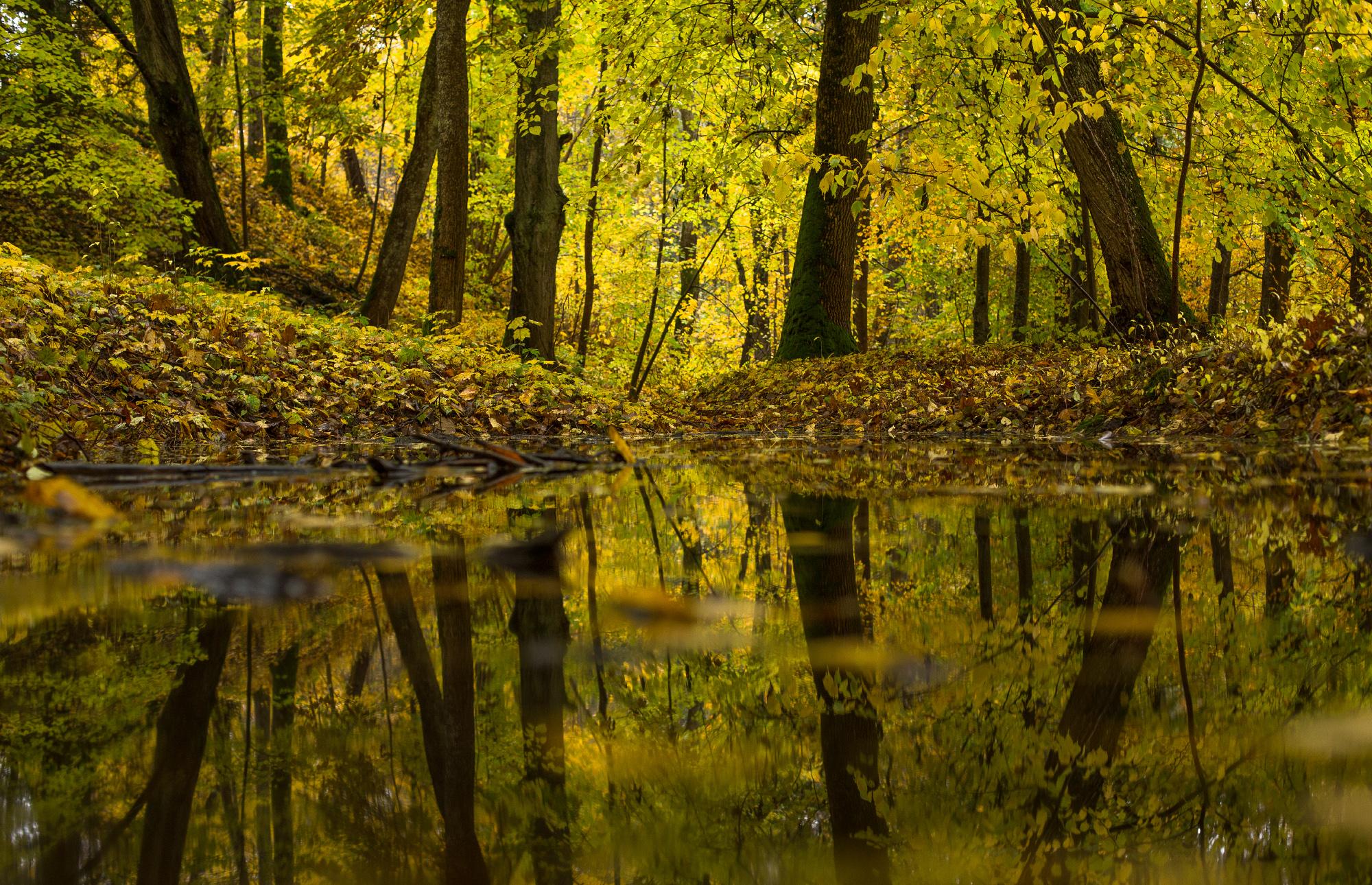 Kollane mets