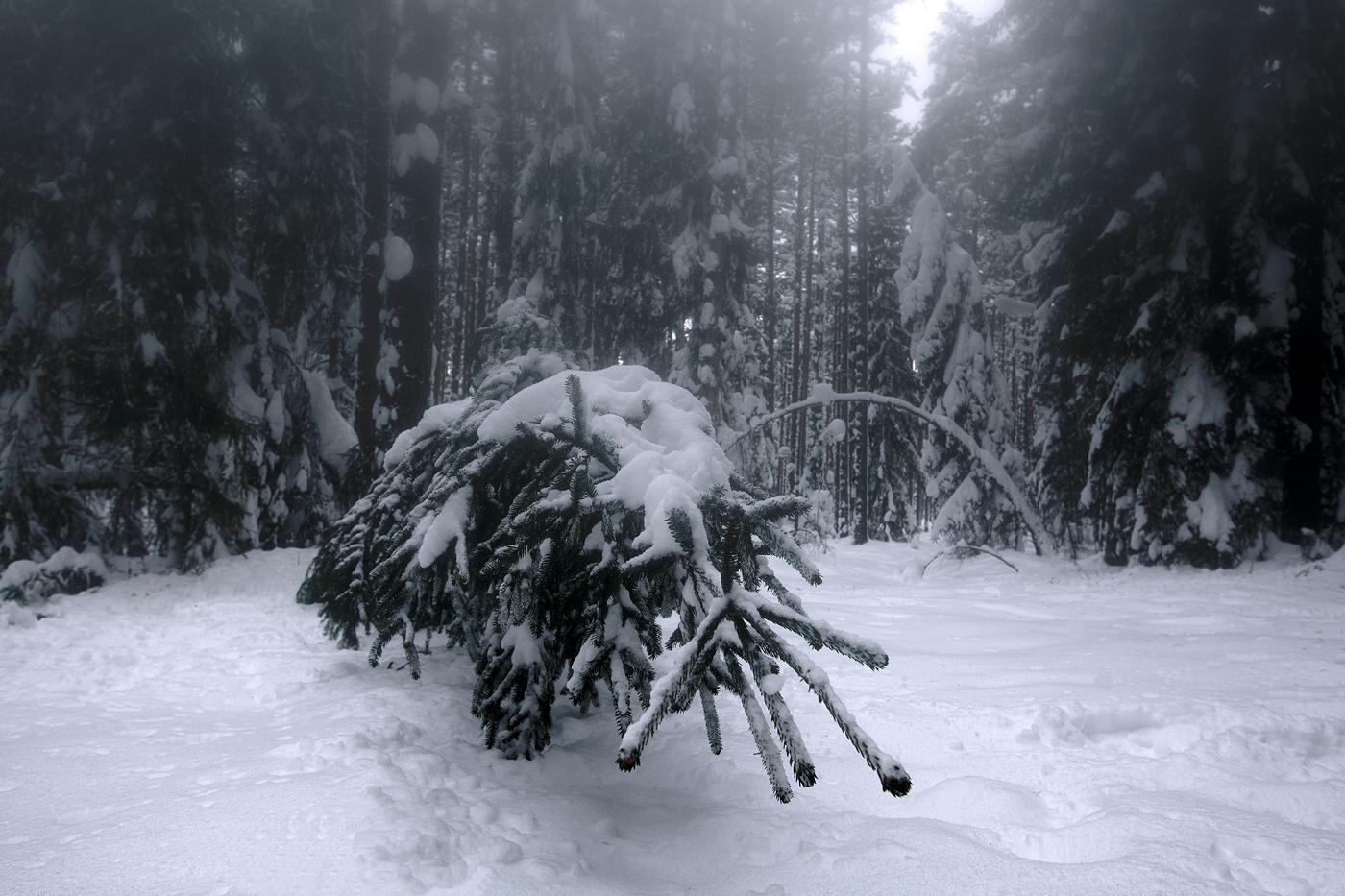 Liiga palju lund
