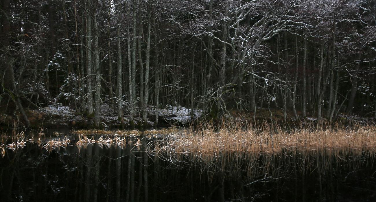 Lumevaeve jaanuari algus