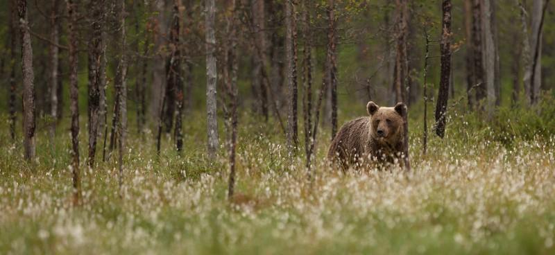Metsa servas uudistas nooruke karu
