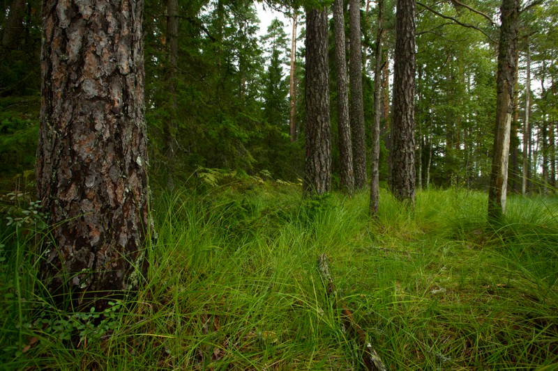 Metsa rohelus