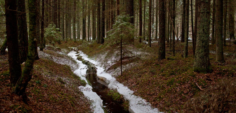 Metsas