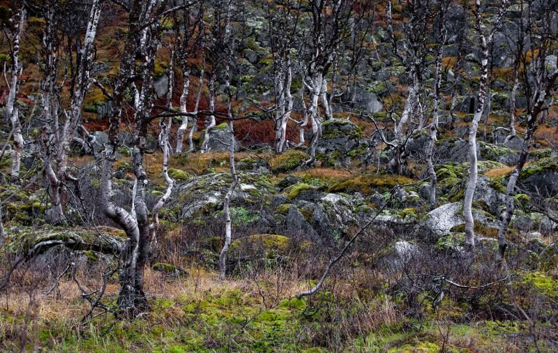 Norra maastik