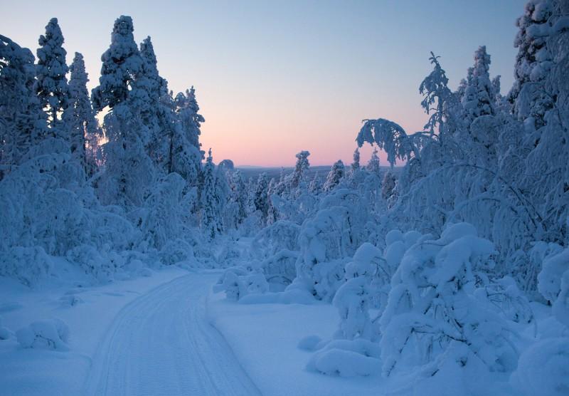 Õhtu metsateel
