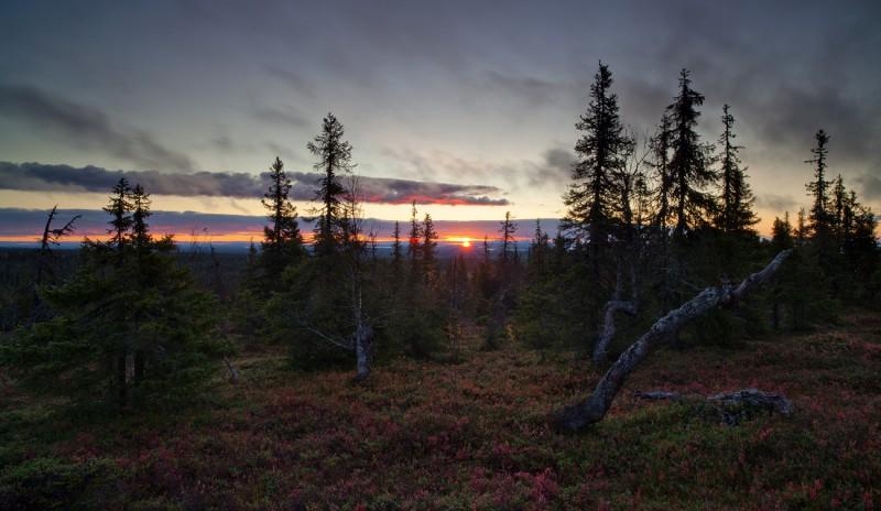 Päikesetõus Riisitundras