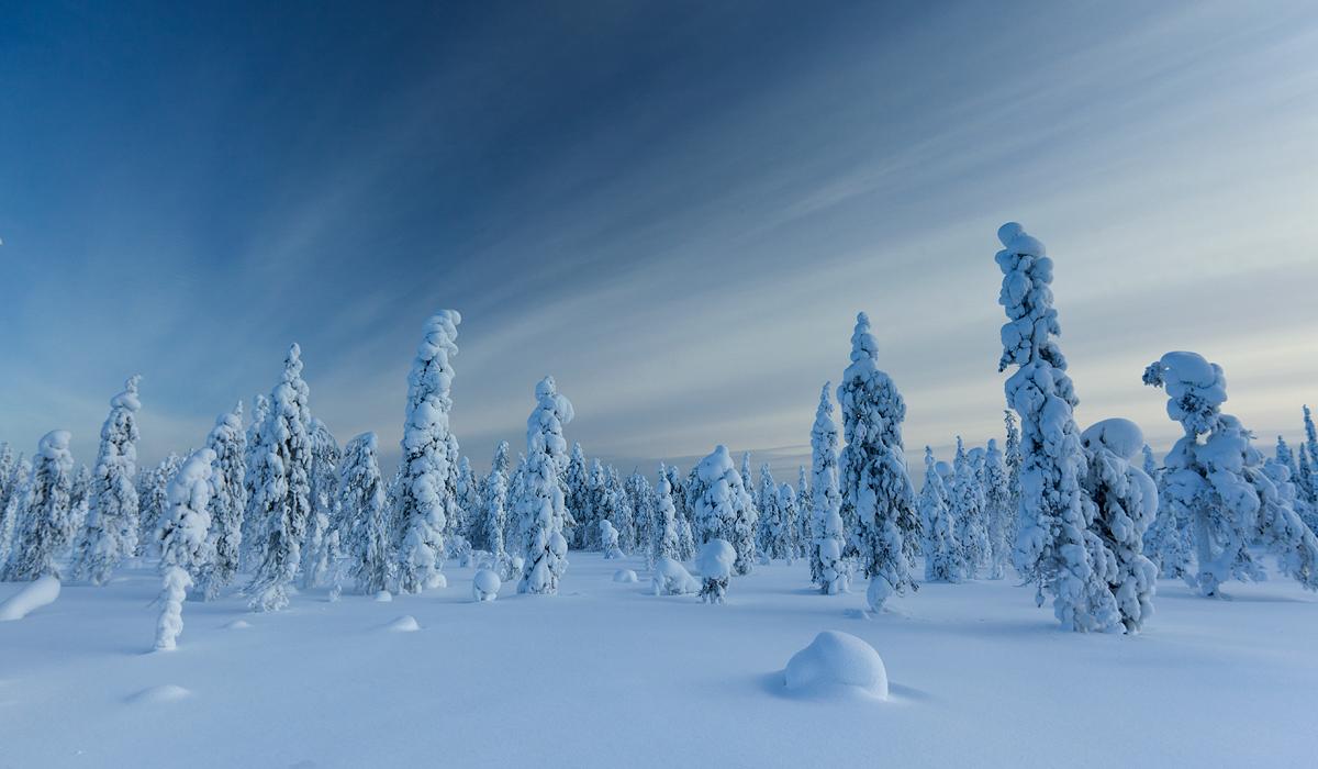 Talvemaastik