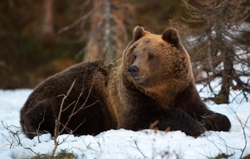 Vana karu