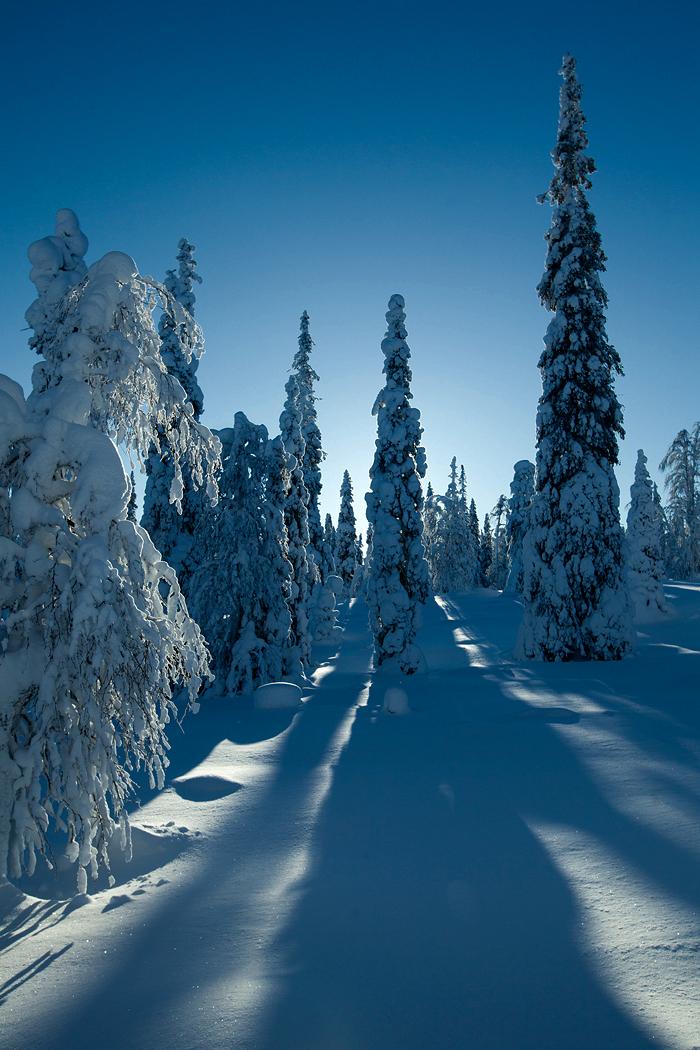 Varjud lumel