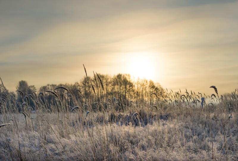 Külmal hommikul