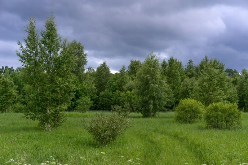 Eestimaa suvi