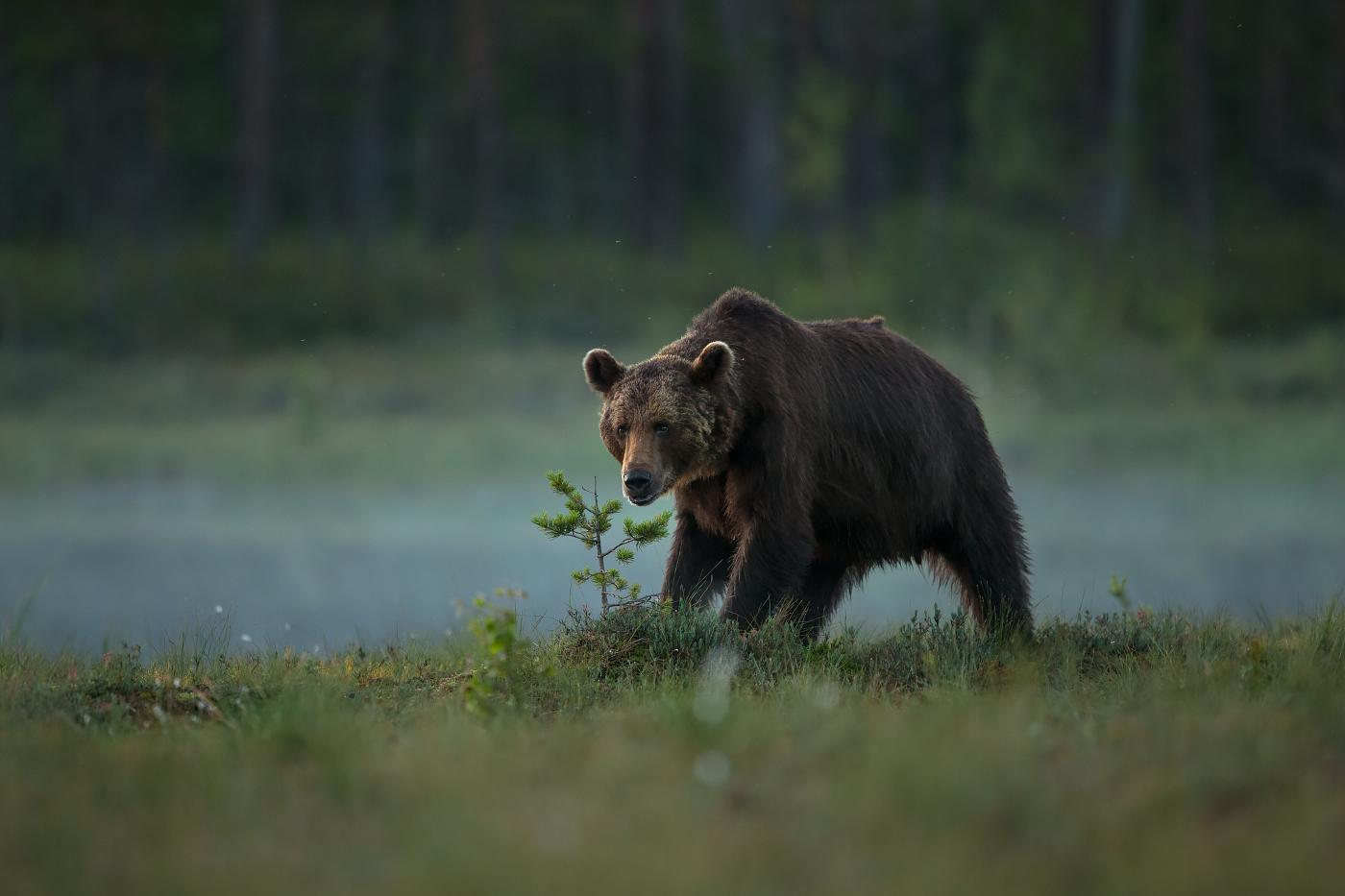 Karul on karvavahetuse aeg käes
