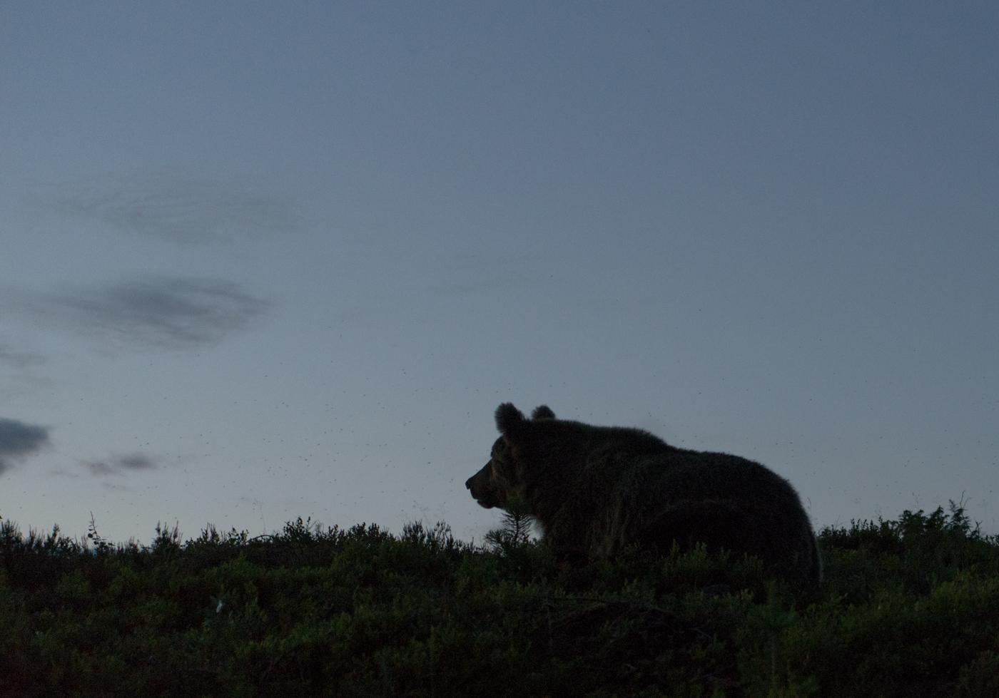 Öös on karusid