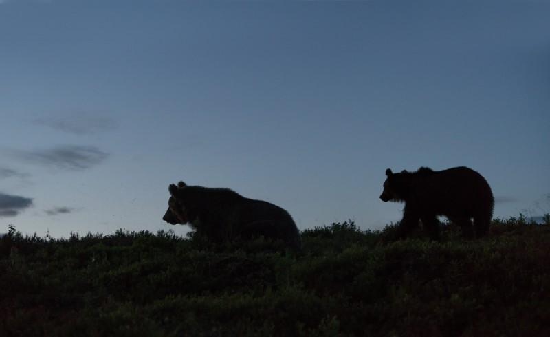 Karud öises  tundras