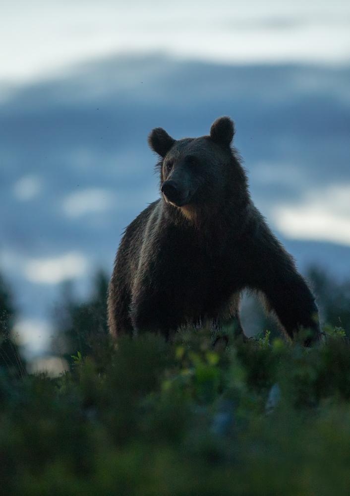 Karu õhtuvalguses
