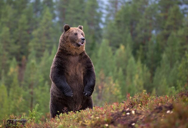 Karu mäeserval