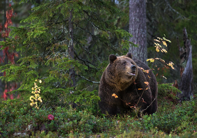 Karuga sügismotiiv