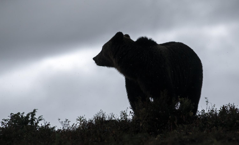Karu mäe otsas