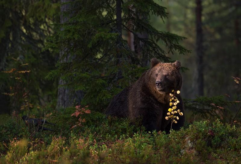 Metsastuudios