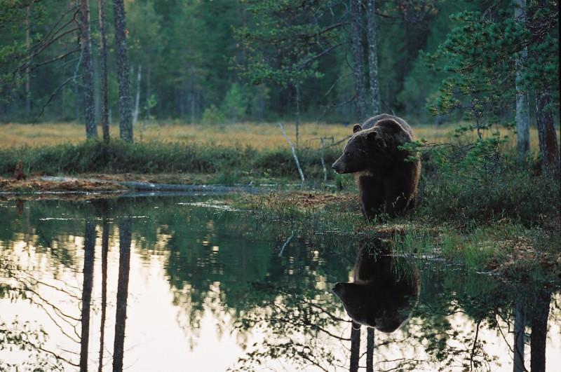 Õhtu karuga  Kodak Iso800
