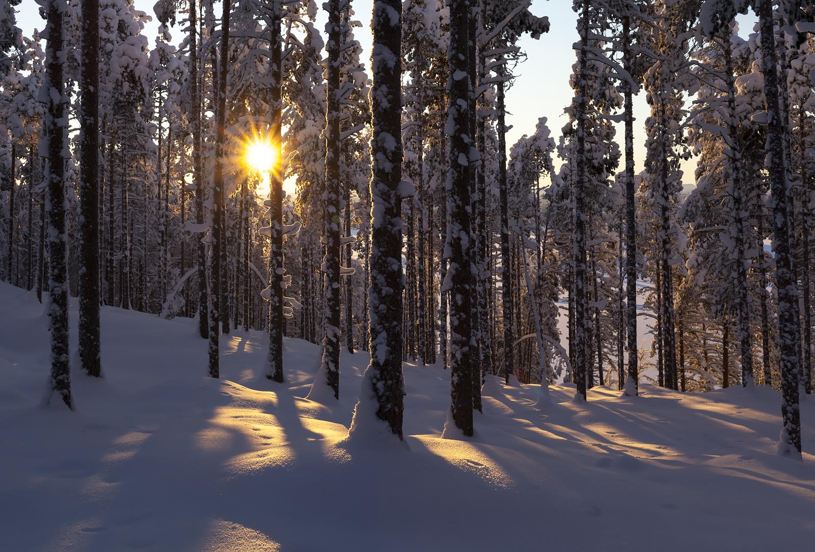 Talv, mets, päike