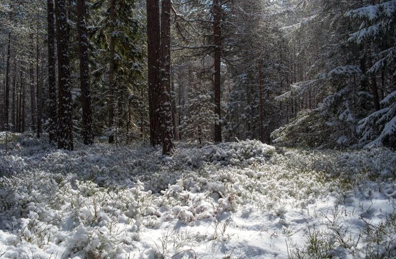 Aprilli lumi