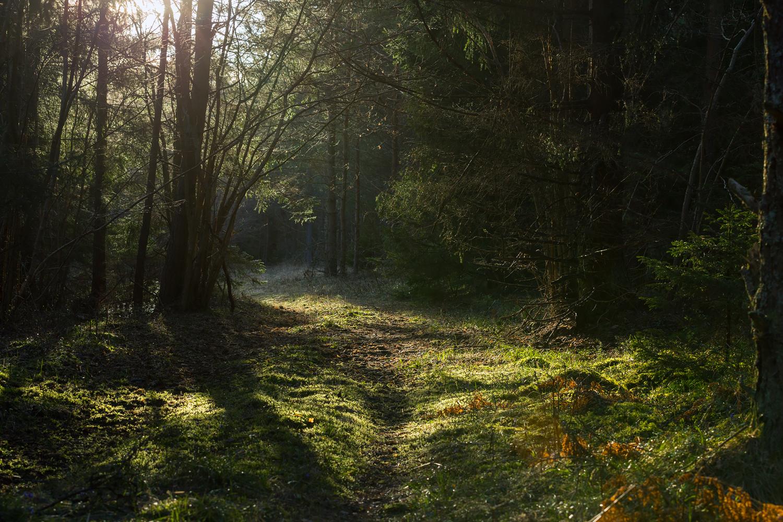 Kevadises metsas