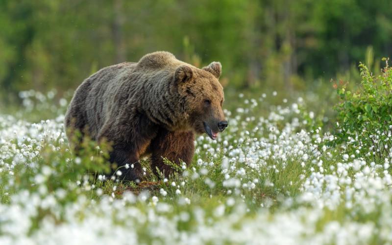 Karu soos