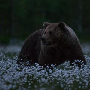 Kesköö karu ja villapead