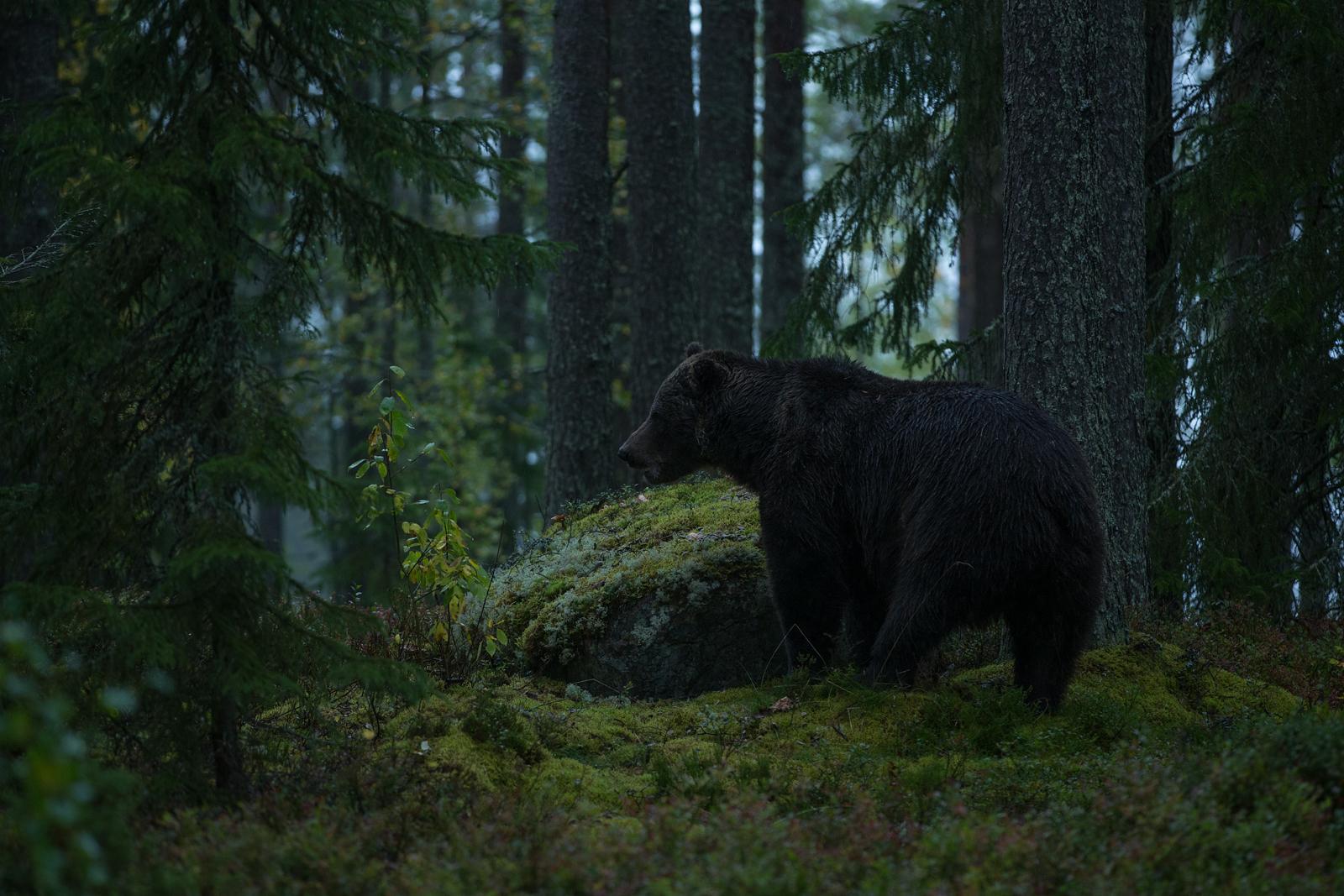 Karuga metsas