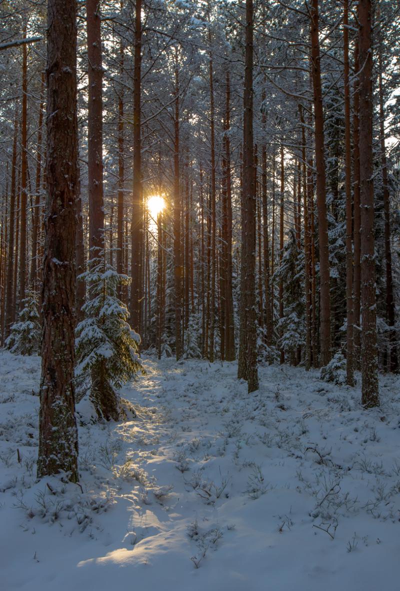 Päike puude vahel
