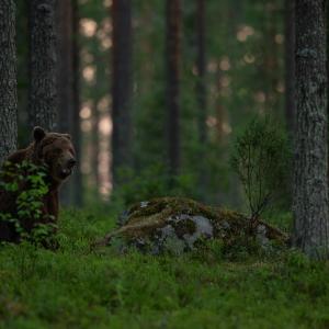 Suveõhtu karuga