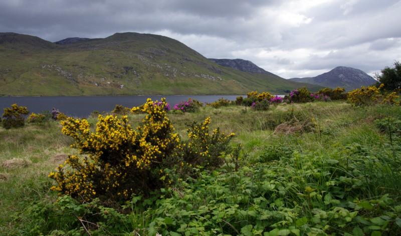 Iirimaal