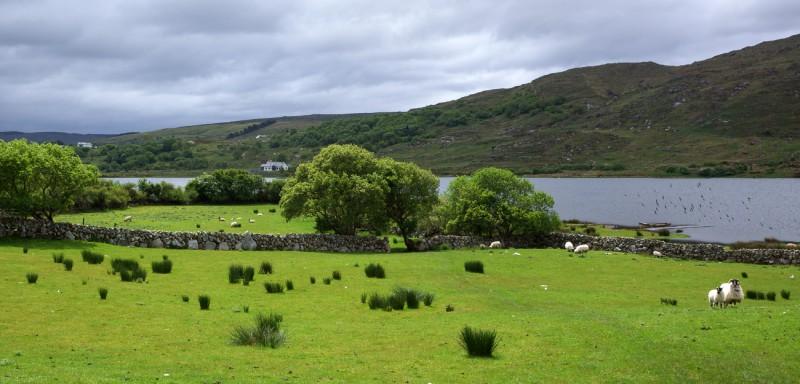 Kevadine rohelus Iirimaal