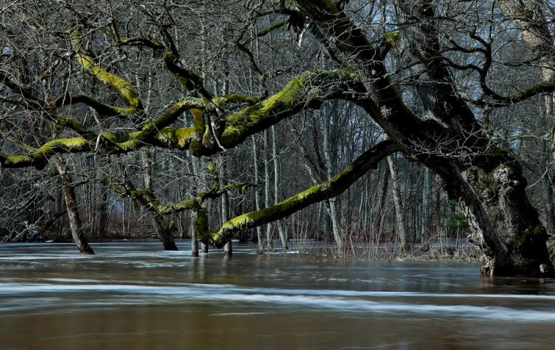 Kevadine suurvesi