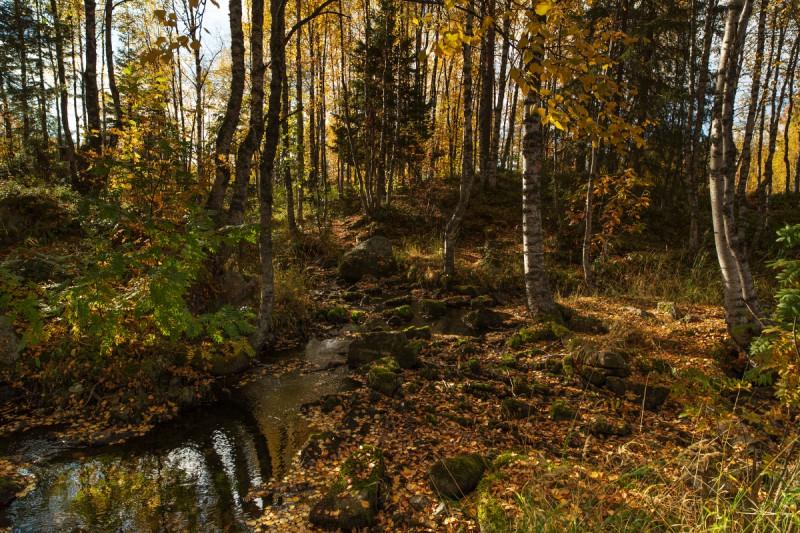 Sügisene Soome maastik
