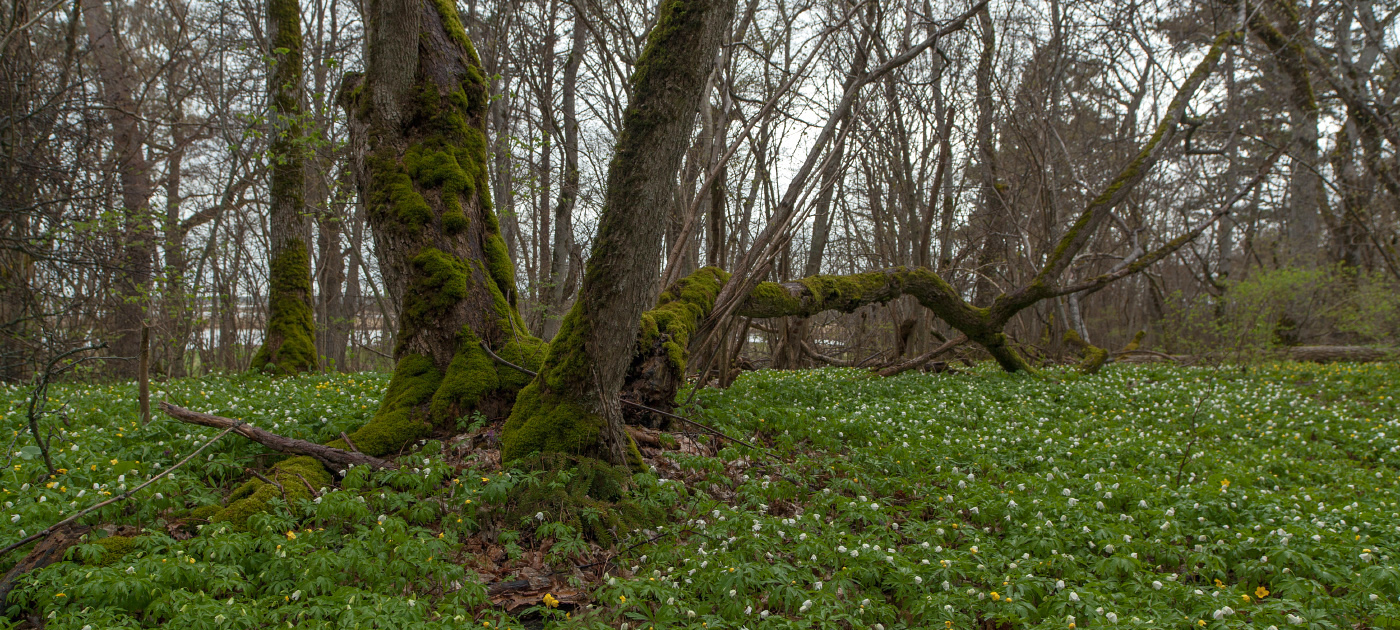Puhtu metsas