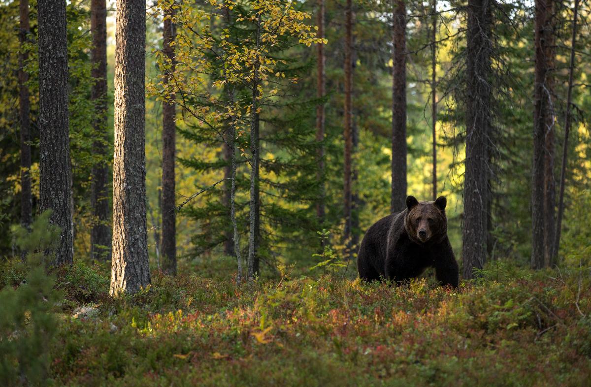 Sügisel karuga metsas
